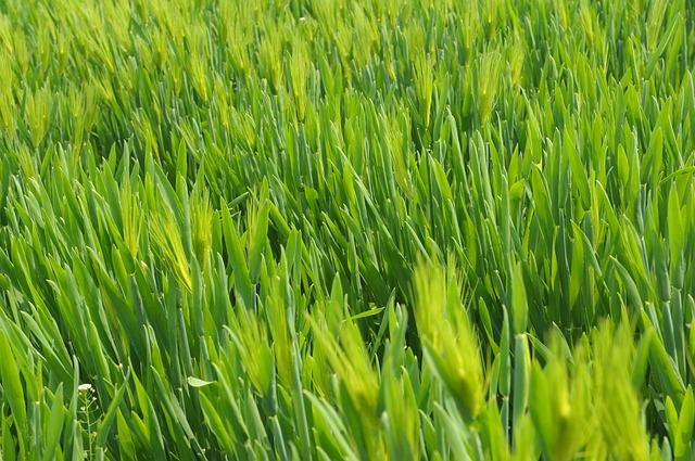 grass-657264_640